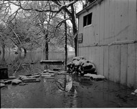 1949-2 High Water 2.jpeg
