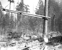 1936-Forest Fire; Fall-1