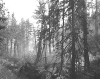 1936-Forest Fire; Fall-2