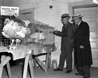 1940 Pacific Coast Turkey Show Scenes-2